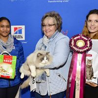 Winner of Chats du Cap Show-1540.jpg